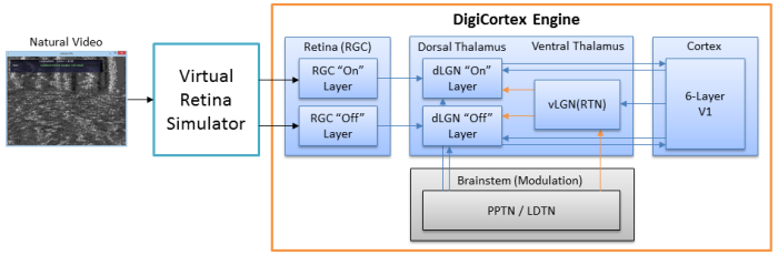 DigiCortex